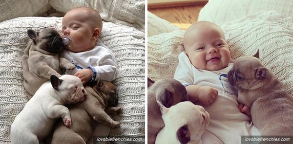 Chân dung những chú cún dễ thương nhất trong năm 2013 17