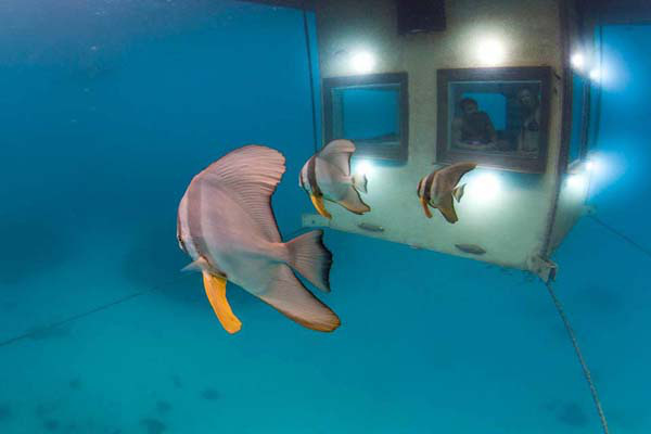Thích thú ngắm nhìn biển cả với căn phòng chìm dưới lòng đại dương 2