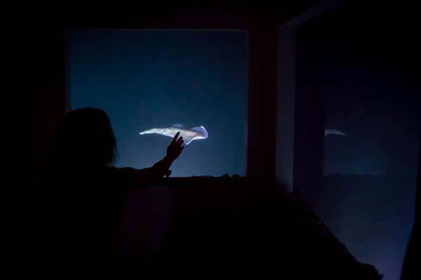 Thích thú ngắm nhìn biển cả với căn phòng chìm dưới lòng đại dương 8