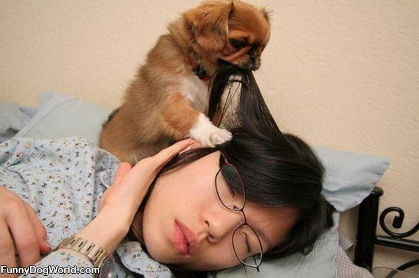 33 lý do vì sao bạn không nên buồn nếu không có chó 1
