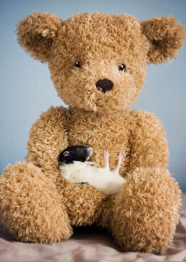 3 chú chuột nhỏ bên gấu bông làm tan chảy trái tim của những người yêu động vật 5