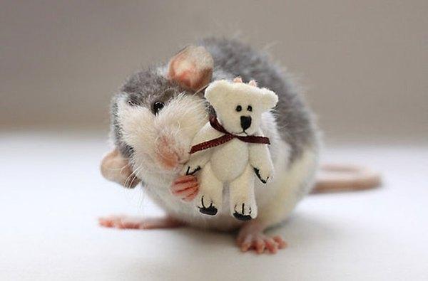 3 chú chuột nhỏ bên gấu bông làm tan chảy trái tim của những người yêu động vật 15