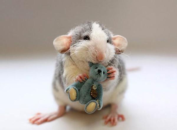 3 chú chuột nhỏ bên gấu bông làm tan chảy trái tim của những người yêu động vật 17