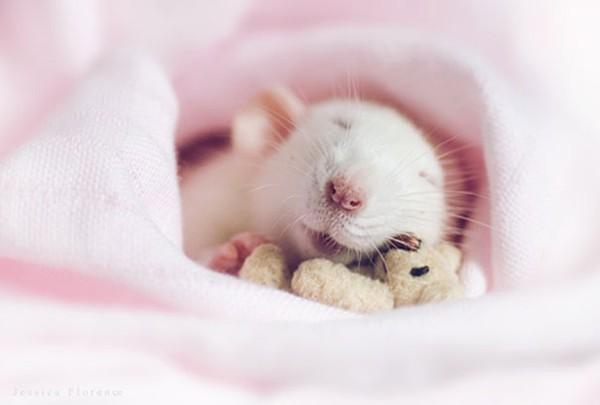 3 chú chuột nhỏ bên gấu bông làm tan chảy trái tim của những người yêu động vật 10