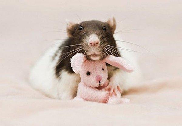 3 chú chuột nhỏ bên gấu bông làm tan chảy trái tim của những người yêu động vật 12