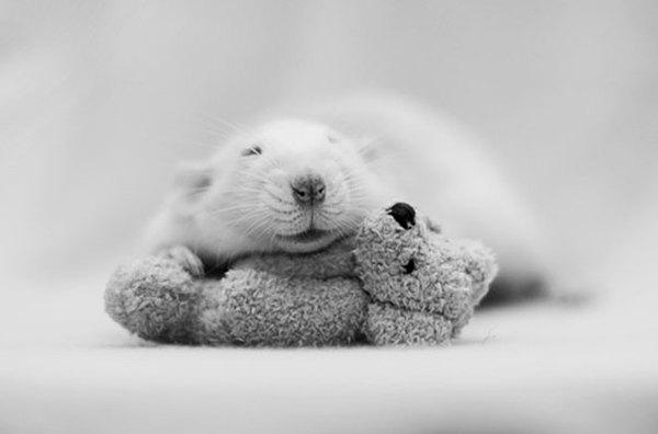 3 chú chuột nhỏ bên gấu bông làm tan chảy trái tim của những người yêu động vật 13