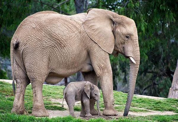 Bộ sưu tập những loài động vật đáng yêu cùng phiên bản mini (P.1) 15