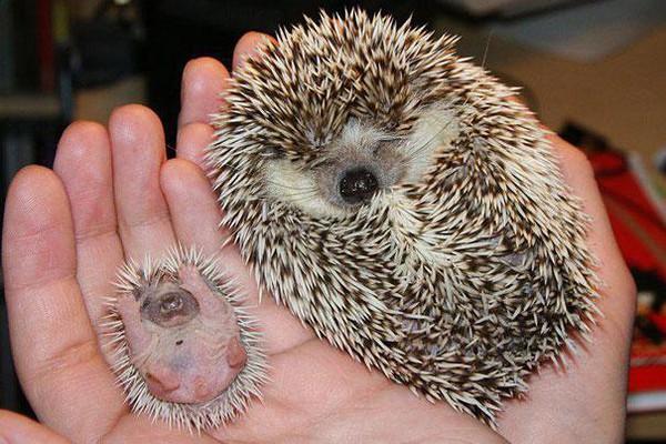 Bộ sưu tập những loài động vật đáng yêu cùng phiên bản mini (P.1) 7