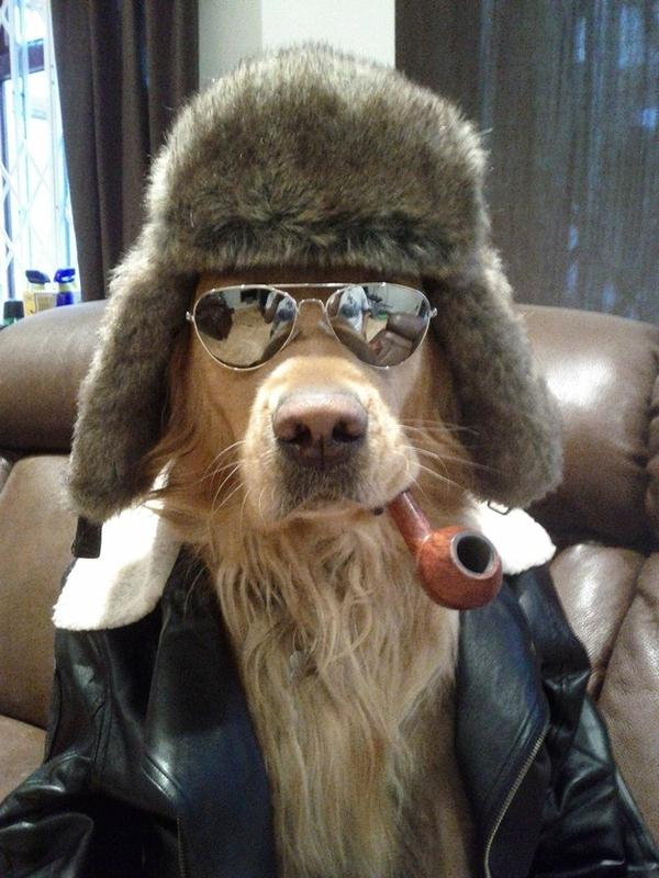 16 chú chó với gu thời trang sành điệu hơn cả con người 1