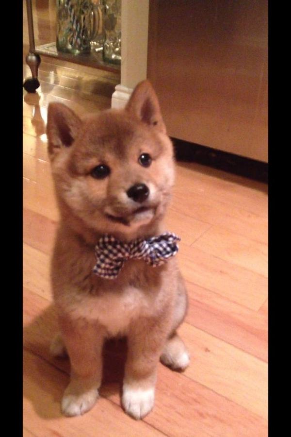 16 chú chó với gu thời trang sành điệu hơn cả con người 10