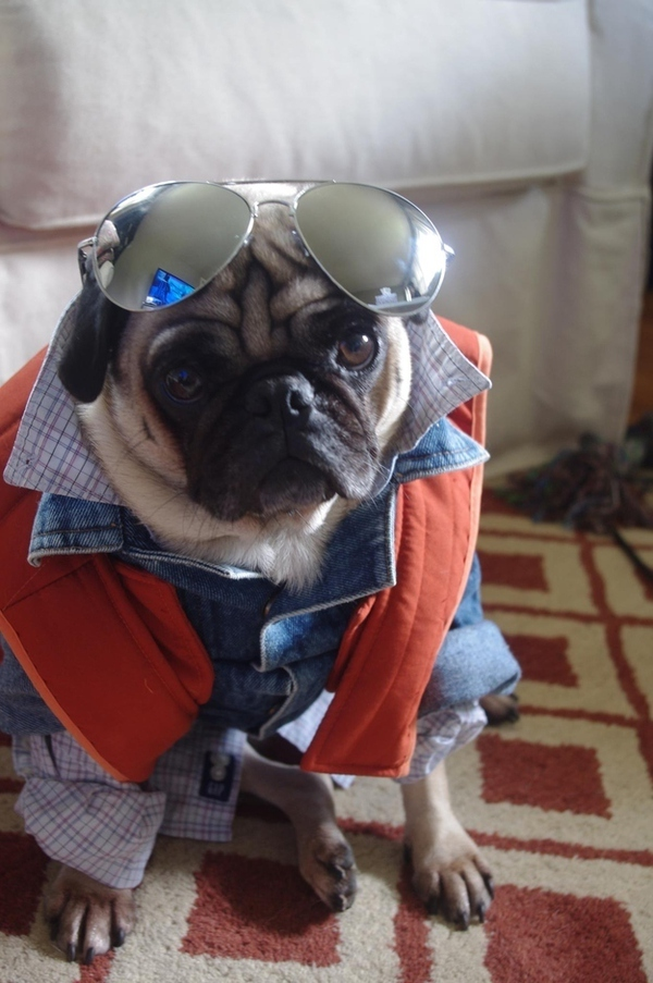 16 chú chó với gu thời trang sành điệu hơn cả con người 11