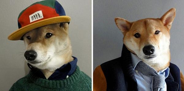 16 chú chó với gu thời trang sành điệu hơn cả con người 2