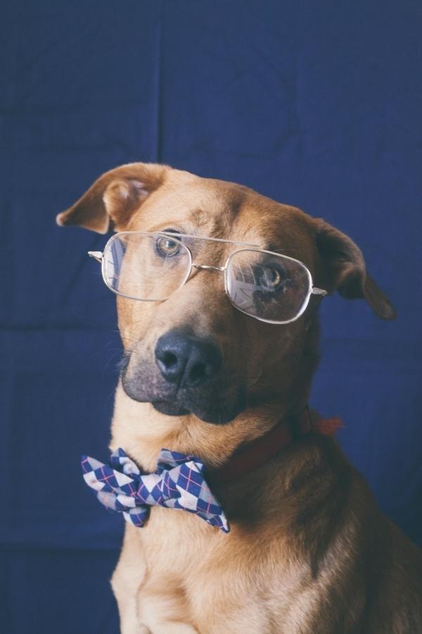 16 chú chó với gu thời trang sành điệu hơn cả con người 3