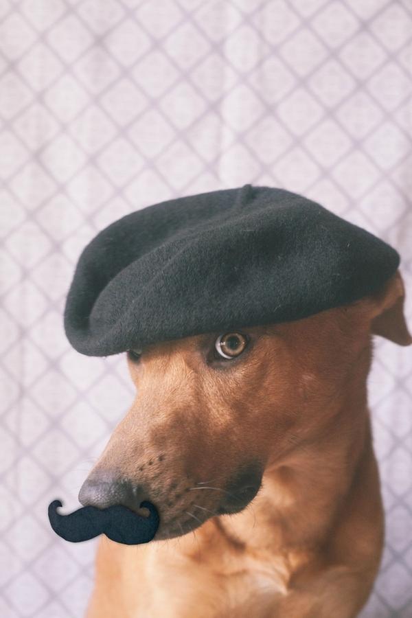 16 chú chó với gu thời trang sành điệu hơn cả con người 4