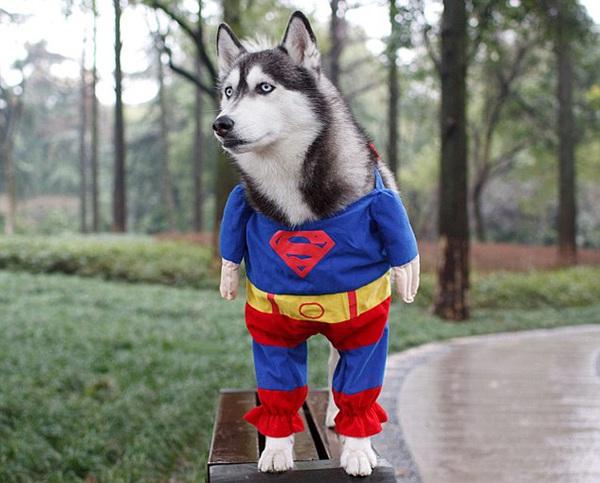 25 bức hình đáng yêu của những con thú cưng trong mùa Halloween 12