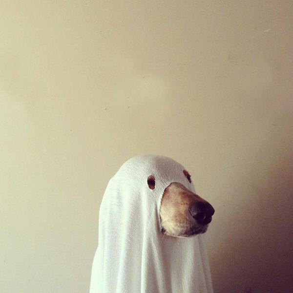 25 bức hình đáng yêu của những con thú cưng trong mùa Halloween 15