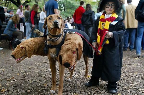 25 bức hình đáng yêu của những con thú cưng trong mùa Halloween 17