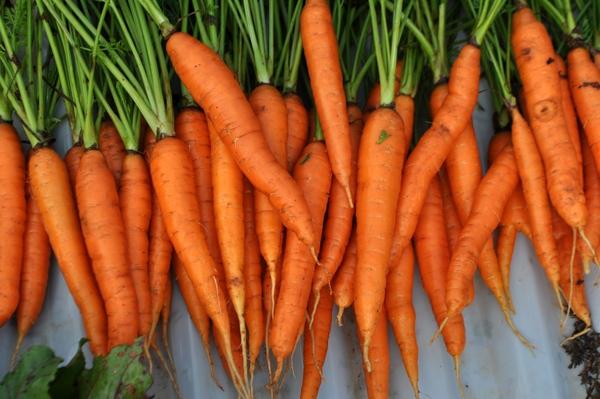 Da trắng hồng, tóc sạch gàu với bí quyết làm đẹp từ cà rốt 1