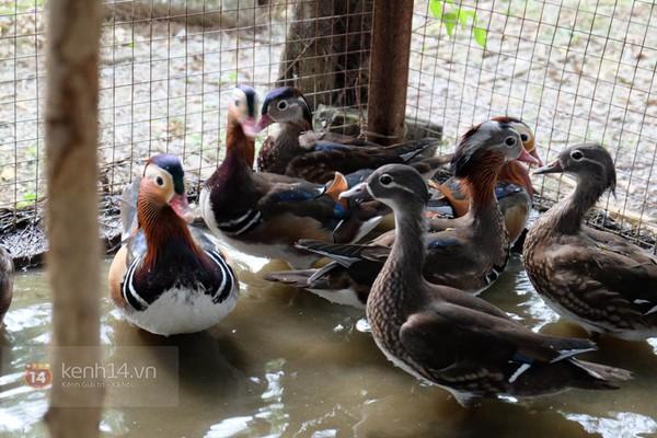 """Cận cảnh trang trại choáng ngợp của """"vua chim"""" ở Hà Nội 1"""