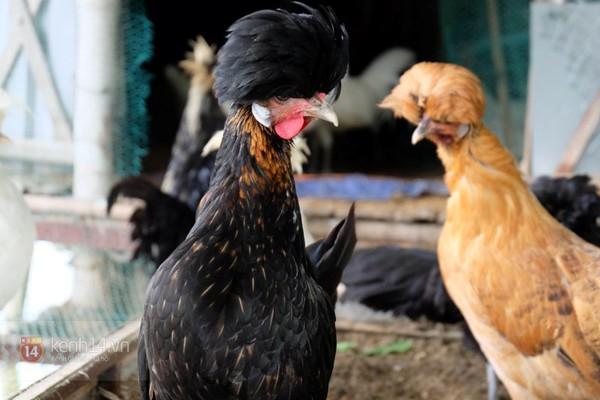 """Cận cảnh trang trại choáng ngợp của """"vua chim"""" ở Hà Nội 12"""