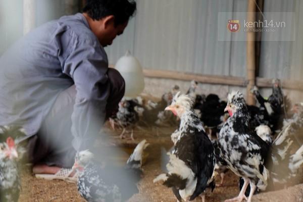 """Cận cảnh trang trại choáng ngợp của """"vua chim"""" ở Hà Nội 14"""