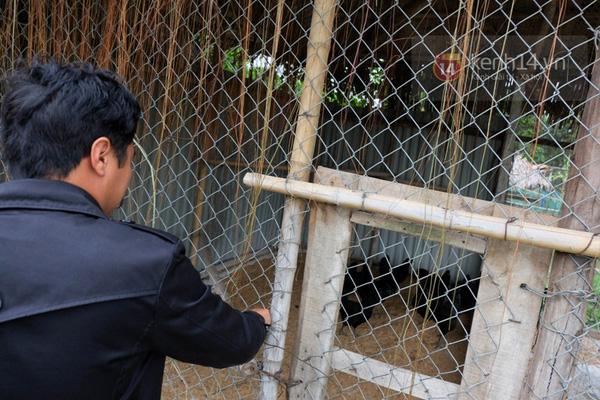 """Cận cảnh trang trại choáng ngợp của """"vua chim"""" ở Hà Nội 17"""