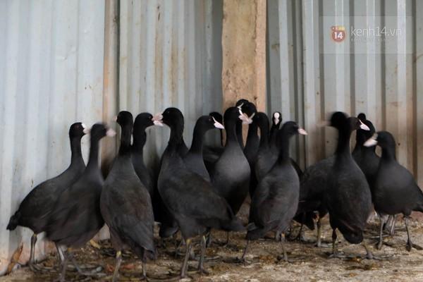 """Cận cảnh trang trại choáng ngợp của """"vua chim"""" ở Hà Nội 19"""