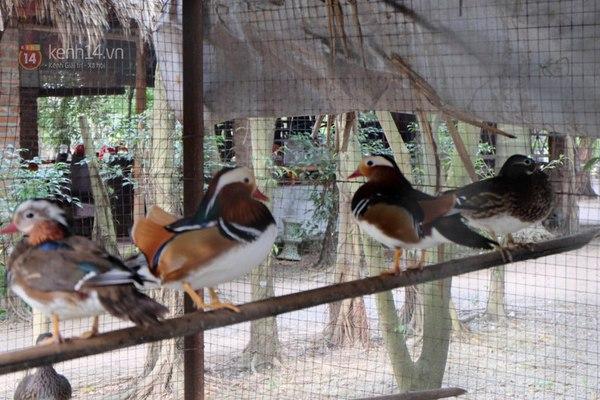 """Cận cảnh trang trại choáng ngợp của """"vua chim"""" ở Hà Nội 5"""