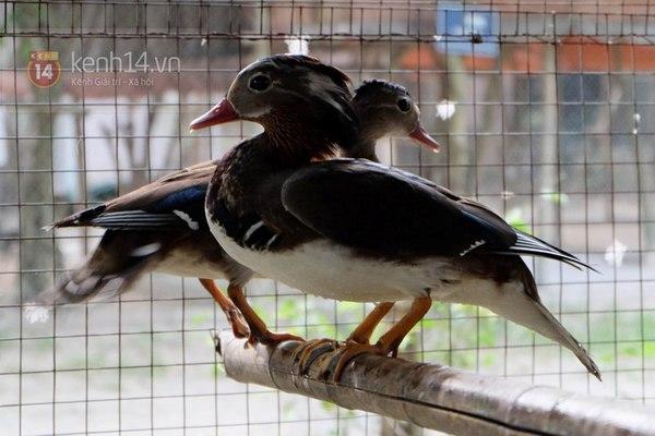"""Cận cảnh trang trại choáng ngợp của """"vua chim"""" ở Hà Nội 9"""