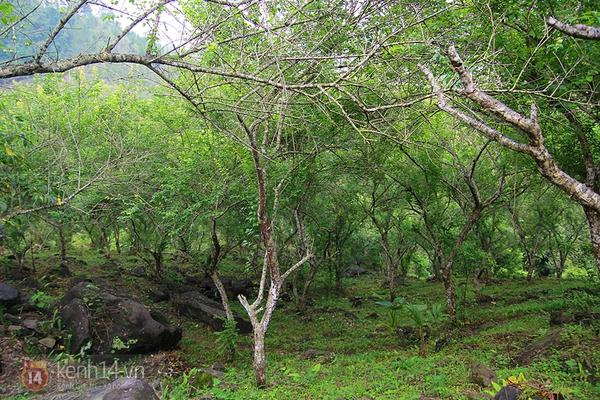"""Vườn mơ rừng trị giá hàng trăm triệu khiến giới trẻ Hà thành """"mê mẩn"""" 1"""