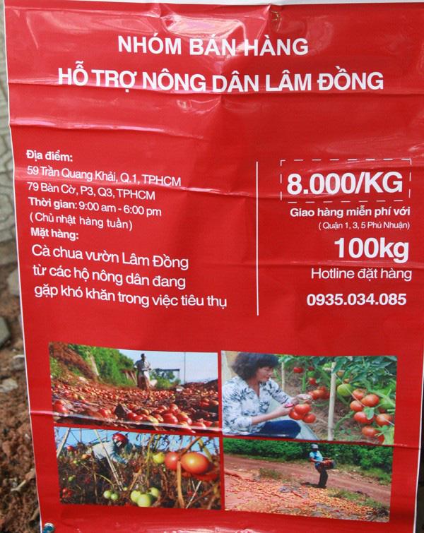 Xót xa nhìn cảnh cà chua ở Lâm Đồng phải bỏ đem cho bò ăn vì rớt giá 9