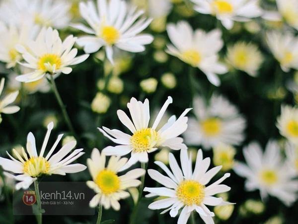 Cho thuê vườn hoa chụp ảnh: Kẻ khóc, người cười 3