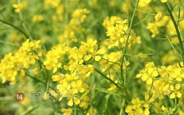 Cho thuê vườn hoa chụp ảnh: Kẻ khóc, người cười 1