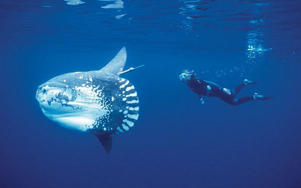 """Điểm tên các loài cá quái vật """"hiếm có khó tìm"""" trên Trái Đất 5"""