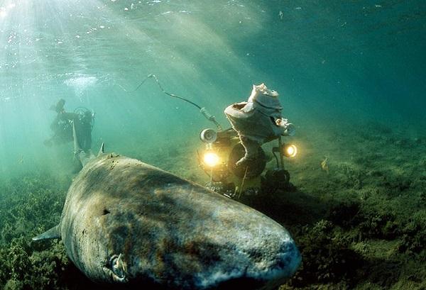 """Điểm tên các loài cá quái vật """"hiếm có khó tìm"""" trên Trái Đất 10"""