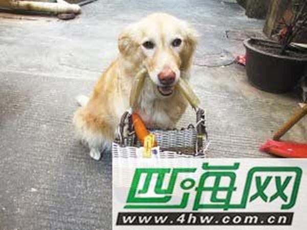 Trung Quốc: Em cún nổi tiểng vì biết mang tiền... đi chợ 1