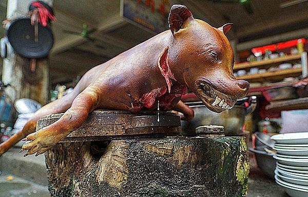 Thực trạng và hình ảnh đáng suy ngẫm về chuyện ăn thịt chó
