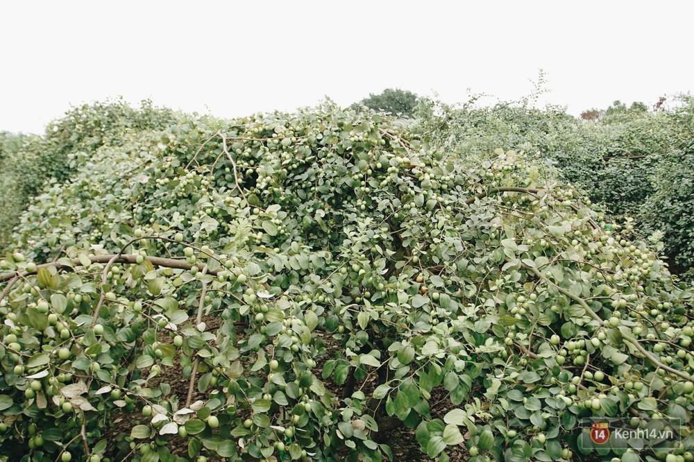 Mùa táo, mùa hoa cải đến rồi, sang Học viện Nông nghiệp ăn tẹt ga, sống ảo cực chất chỉ với 15 nghìn - Ảnh 1.