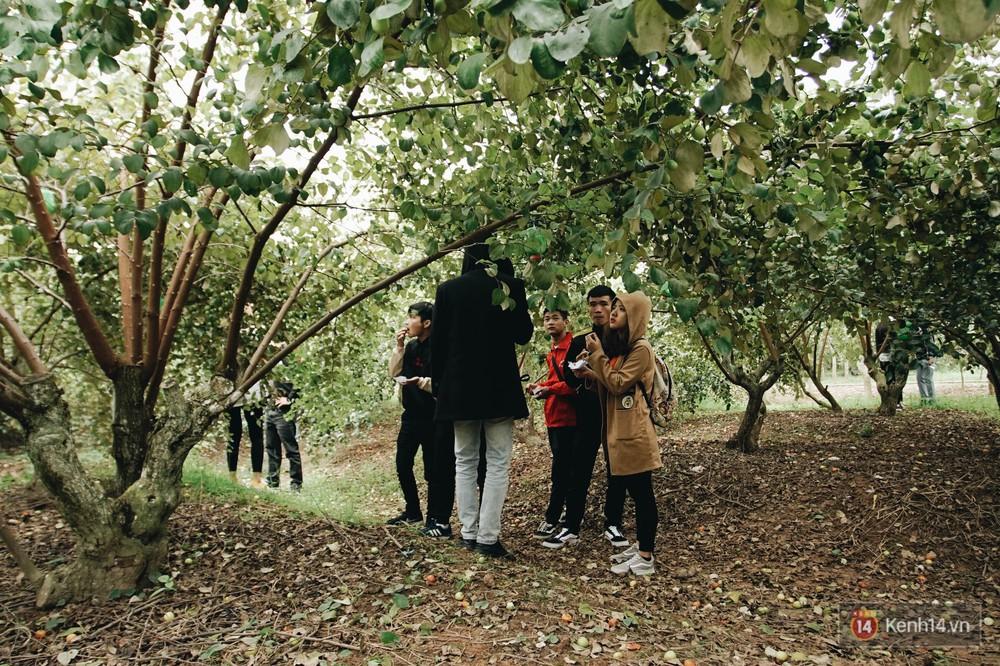 Mùa táo, mùa hoa cải đến rồi, sang Học viện Nông nghiệp ăn tẹt ga, sống ảo cực chất chỉ với 15 nghìn - Ảnh 7.