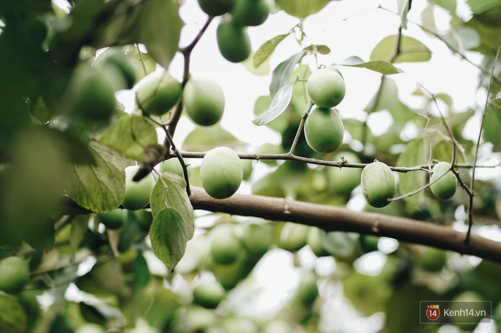 Mùa táo, mùa hoa cải đến rồi, sang Học viện Nông nghiệp ăn tẹt ga, sống ảo cực chất chỉ với 15 nghìn - Ảnh 5.