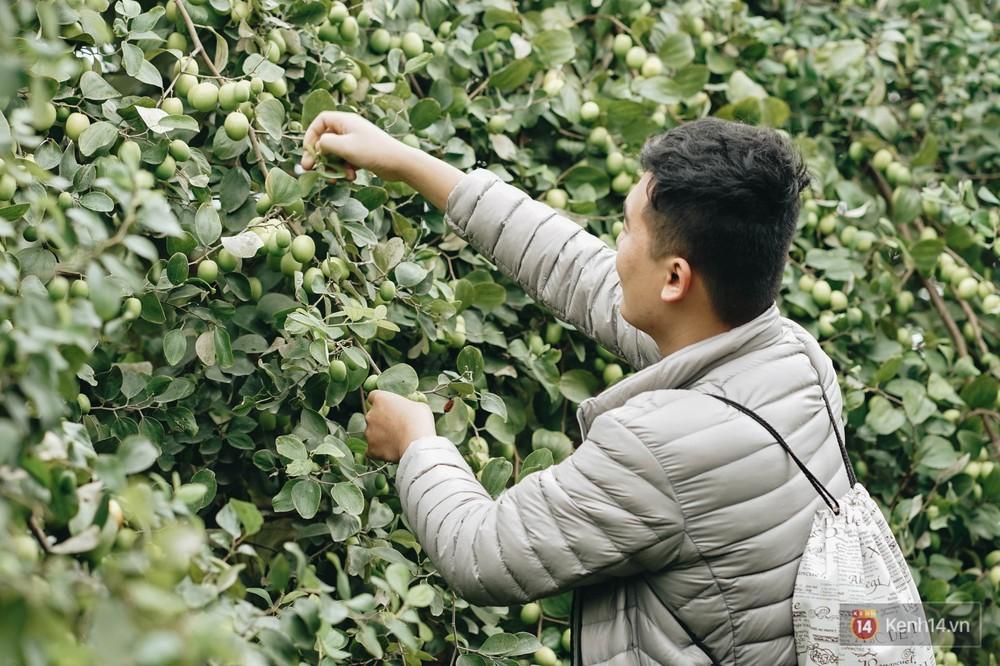 Mùa táo, mùa hoa cải đến rồi, sang Học viện Nông nghiệp ăn tẹt ga, sống ảo cực chất chỉ với 15 nghìn - Ảnh 4.