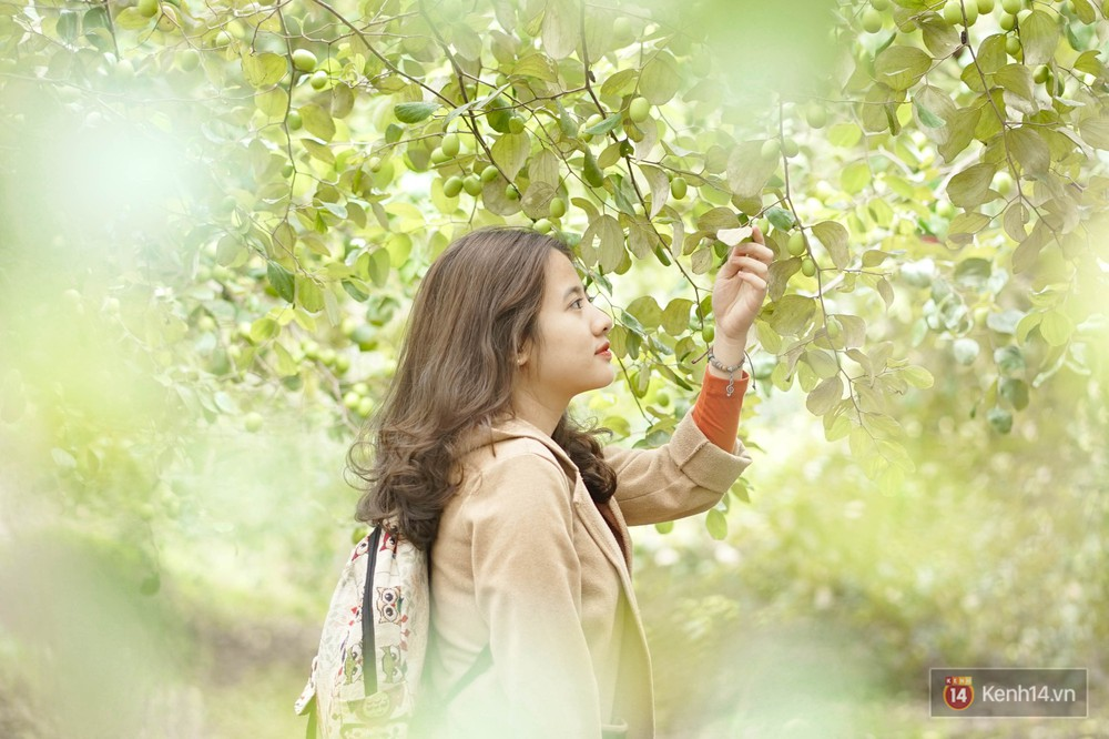 Mùa táo, mùa hoa cải đến rồi, sang Học viện Nông nghiệp ăn tẹt ga, sống ảo cực chất chỉ với 15 nghìn - Ảnh 3.