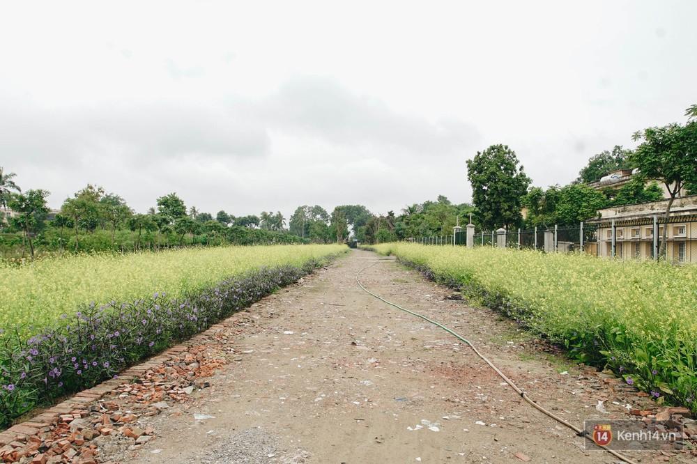 Mùa táo, mùa hoa cải đến rồi, sang Học viện Nông nghiệp ăn tẹt ga, sống ảo cực chất chỉ với 15 nghìn - Ảnh 12.