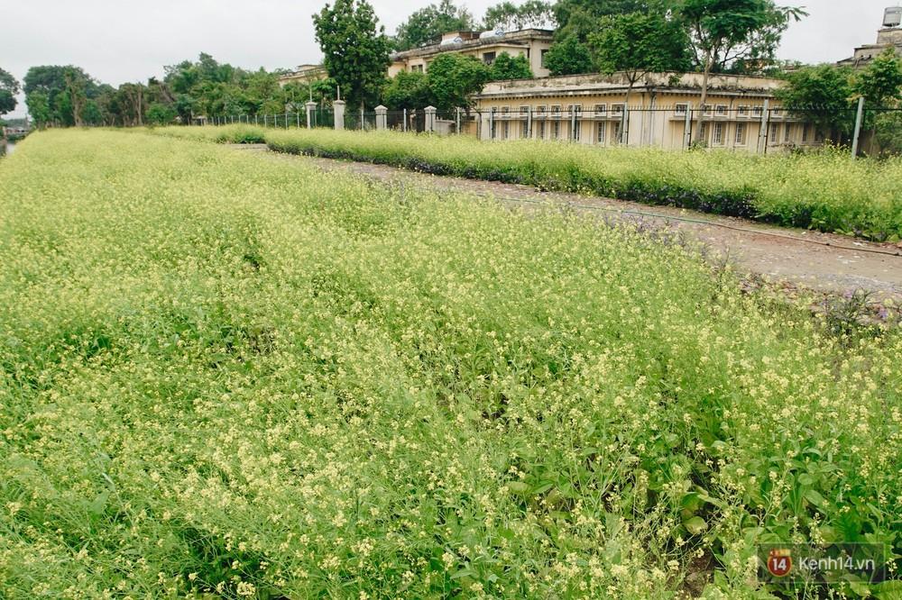 Mùa táo, mùa hoa cải đến rồi, sang Học viện Nông nghiệp ăn tẹt ga, sống ảo cực chất chỉ với 15 nghìn - Ảnh 13.