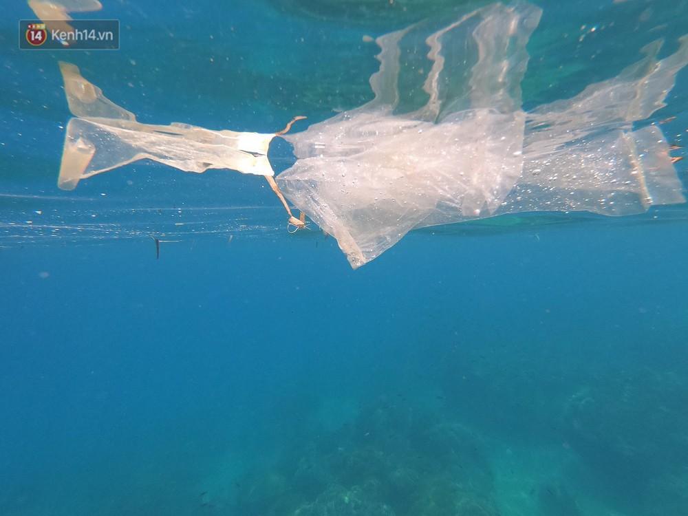 Gặp anh giám đốc mê nhặt rác ở Đà Nẵng: 10 năm dọn vệ sinh không công dưới đáy biển - Ảnh 4.
