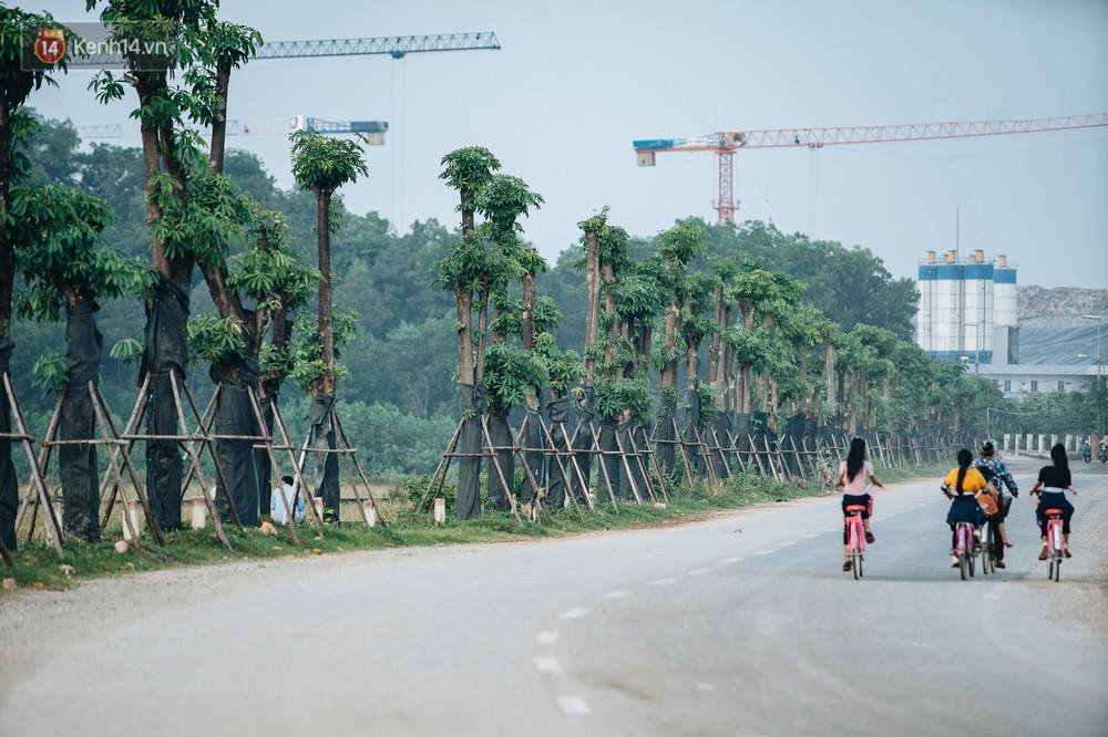 Cuộc di cư của 96 cây hoa sữa từ hồ Tây ra bãi rác Nam Sơn: Đâm chồi lộc xanh, hy vọng khuếch tán mùi hôi thối - Ảnh 1.
