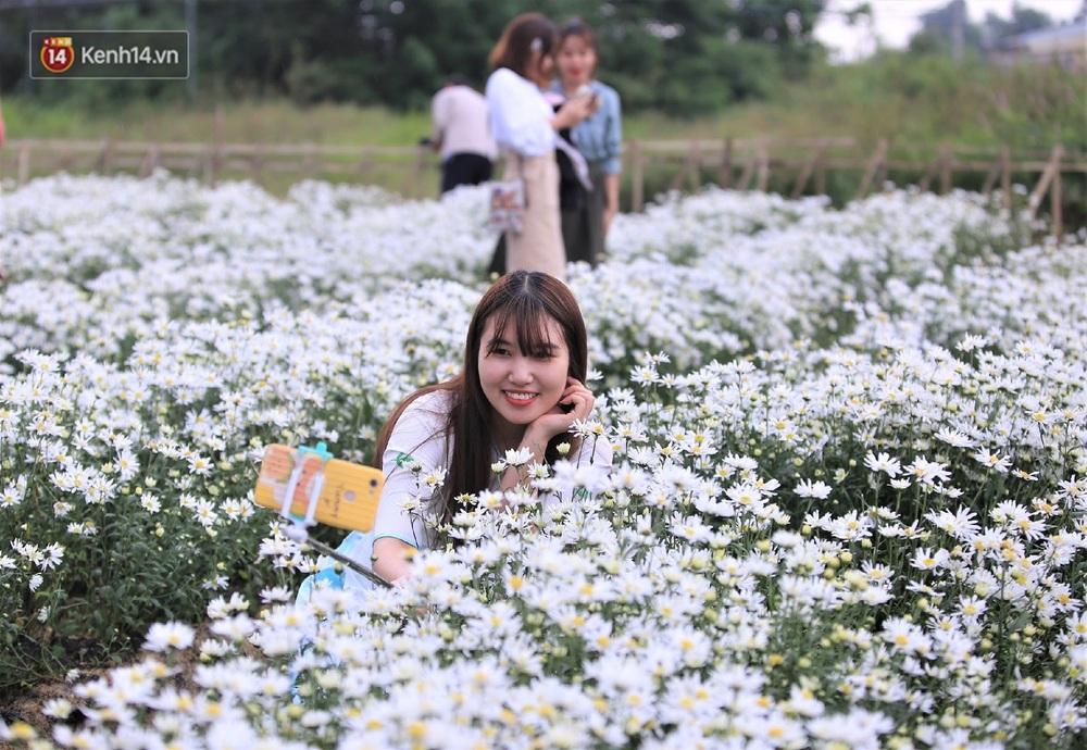 """Hàng nghìn người chen chúc """"check in"""" vườn cúc họa mi lần đầu tiên được trồng ở Đà Nẵng - Ảnh 4."""