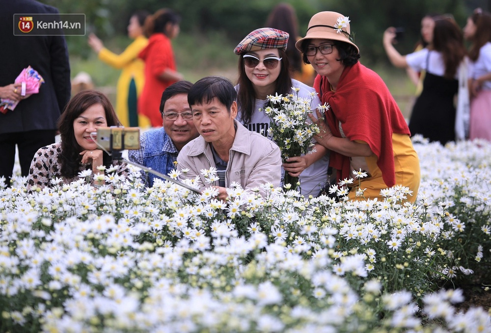 """Hàng nghìn người chen chúc """"check in"""" vườn cúc họa mi lần đầu tiên được trồng ở Đà Nẵng - Ảnh 13."""