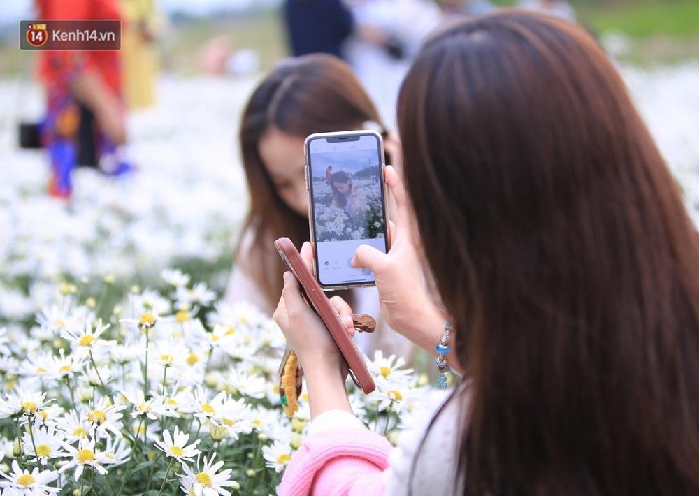 """Hàng nghìn người chen chúc """"check in"""" vườn cúc họa mi lần đầu tiên được trồng ở Đà Nẵng - Ảnh 11."""