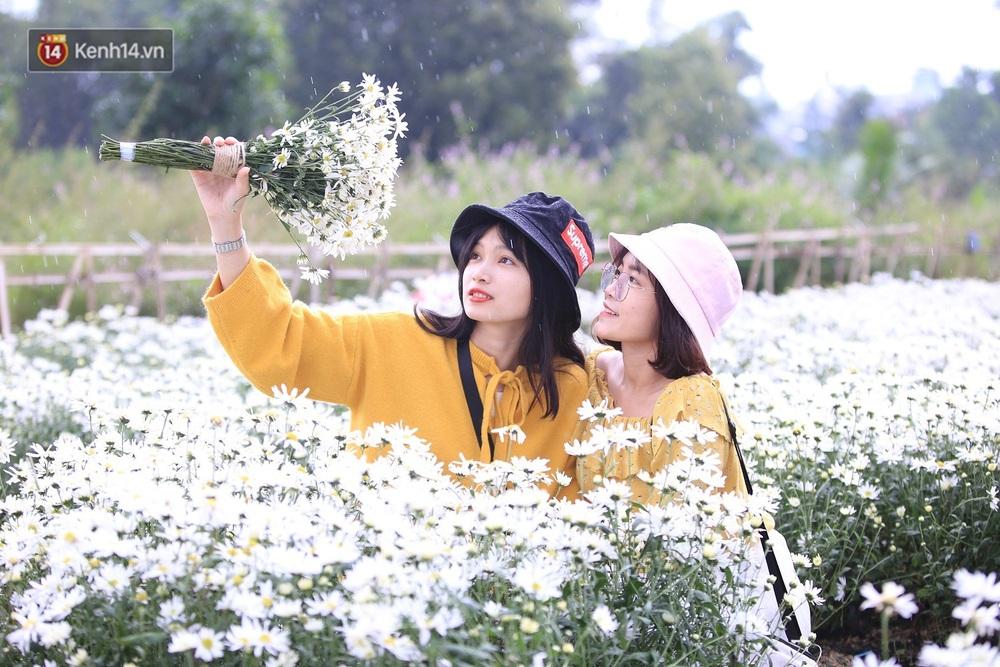 """Hàng nghìn người chen chúc """"check in"""" vườn cúc họa mi lần đầu tiên được trồng ở Đà Nẵng - Ảnh 7."""